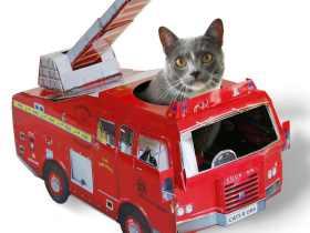 Suck UK 小猫玩具 消防车/飞机/汽车 Cat Toys